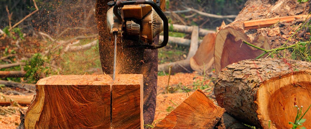 Bau schnittholz für ihren bedarf renner webseite